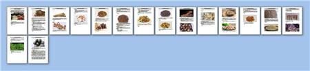 常用烹饪香料的种类与使用技巧